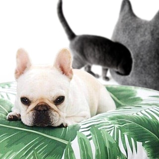 A NEW LIFE WITH YOUR PET